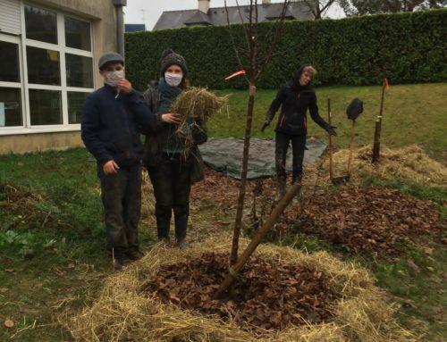 Eco-collège : séance jardinage jeudi 3 décembre